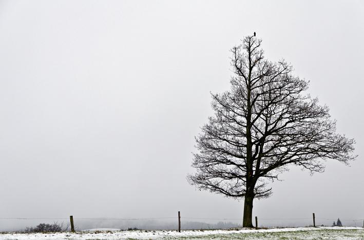 Eiche_Schnee_red