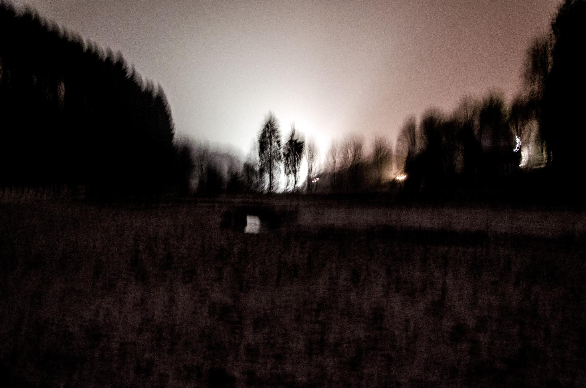 Wald Tal Morgen