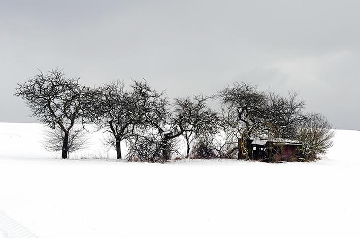 Bäume im  Schnee_red
