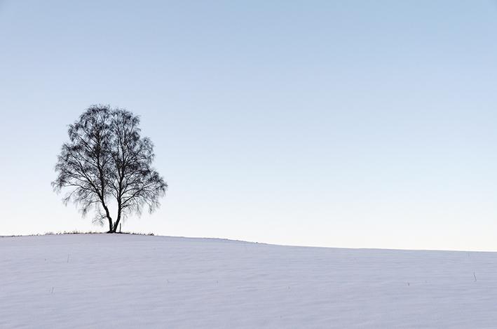 Baum_Schnee_Borner_red