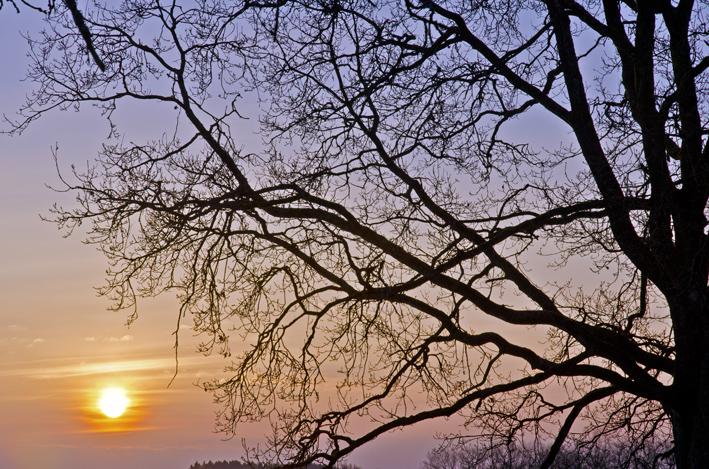 Baum_Sonnenaufgang2_red