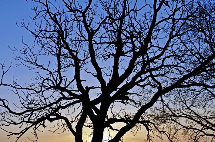 Baum_Sonnenaufgang_red