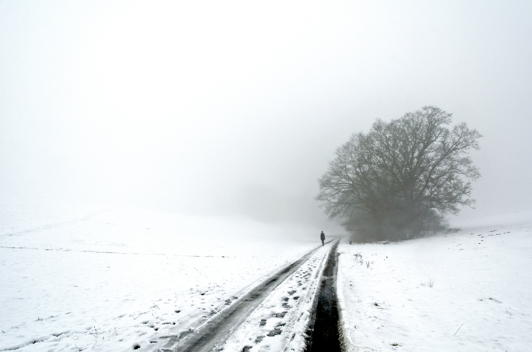fog_Baum