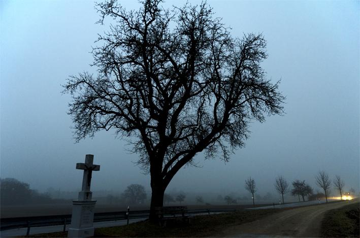 Bäume_Kreuz_Schweiz_red