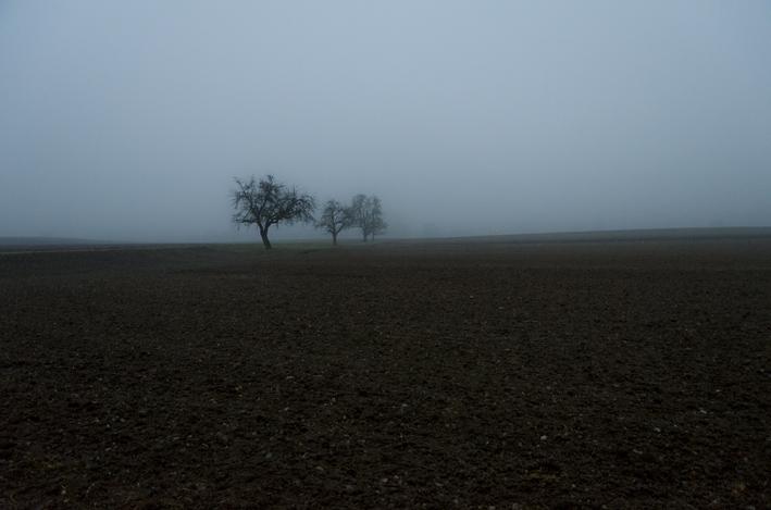 Bäume_Nebel_Schweiz_red
