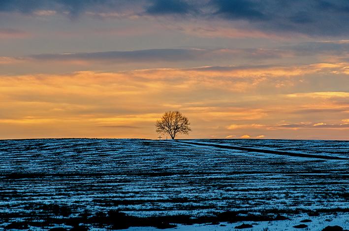 Baum_Schnee_Sonnenuntergang_red
