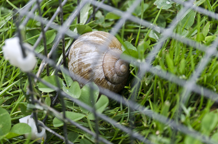 snail in jail
