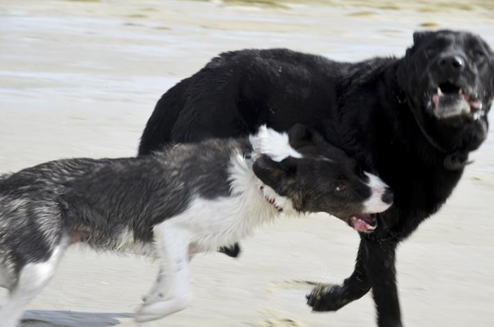 Schier15_Hunde_red