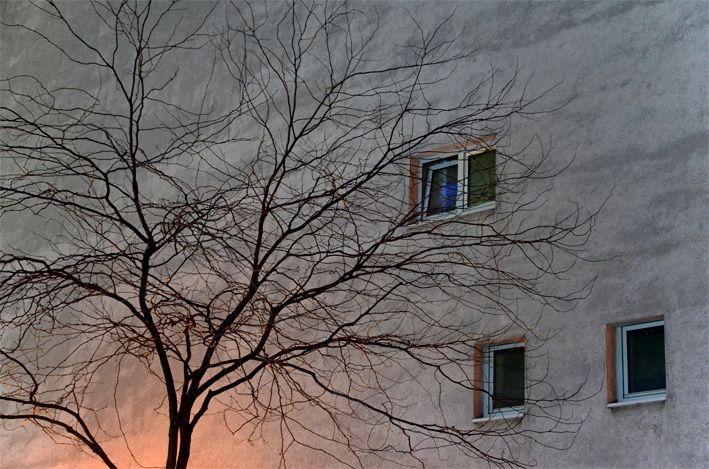 Essen_Haus mit Baum