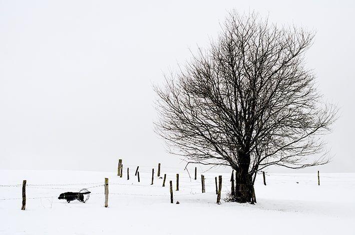 Januar 2015 - mit Viveka und Cooper auf Jochens Wiese im tiefen Schnee.