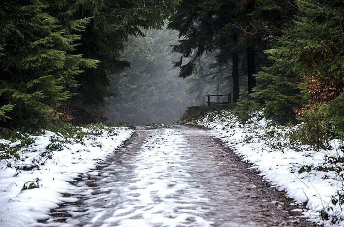 Wiehltalsperre_Wald